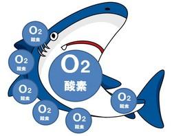 深海ザメ スクワレン 酸素