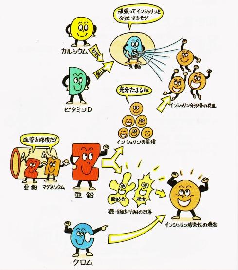 インシュリン 分泌 感受性 ビタミンD クロム