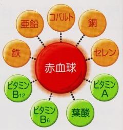 赤血球 亜鉛 鉄 銅 セレン