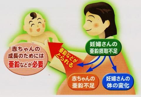 妊婦 赤ちゃん 亜鉛