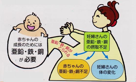 妊婦さん 亜鉛 鉄 銅 赤ちゃん