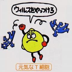 オイスター T細胞 ウイルス