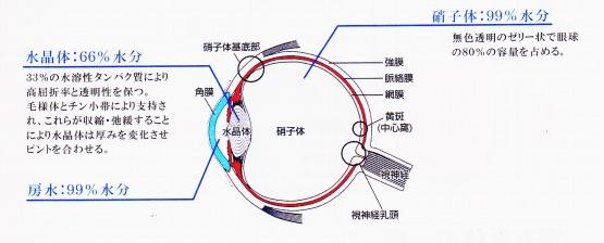 目の構造 水晶体 硝子体 房水 水分